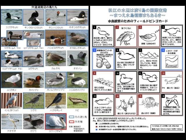 渡り鳥の資料